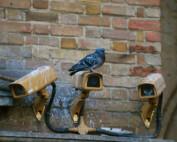 Taube sitzt auf Überwachungskamera